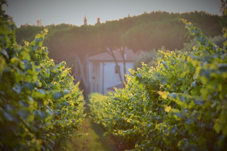 Wijnveld Italie