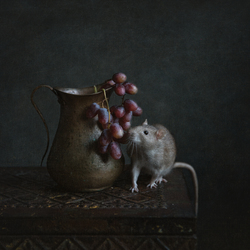 stilleven met rat