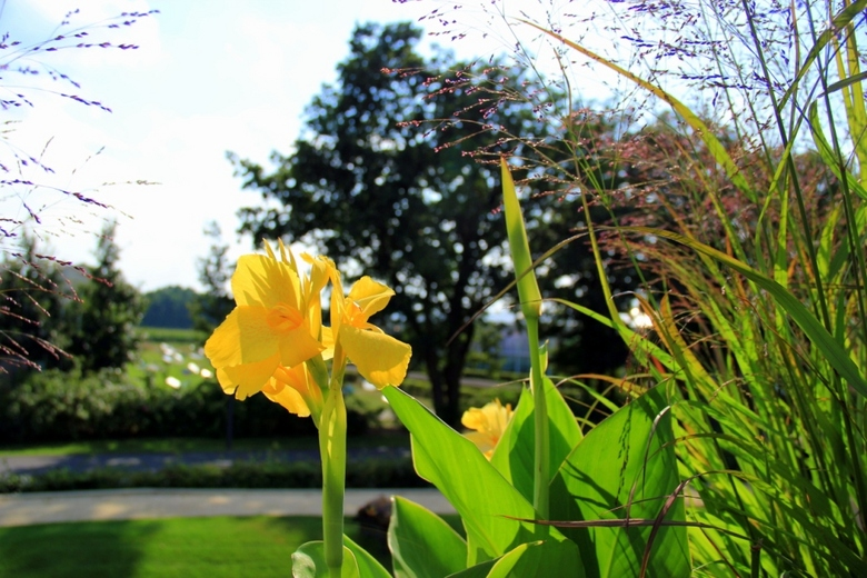 Yellow one - Deze foto is gemaakt bij de Floriade in Venlo.