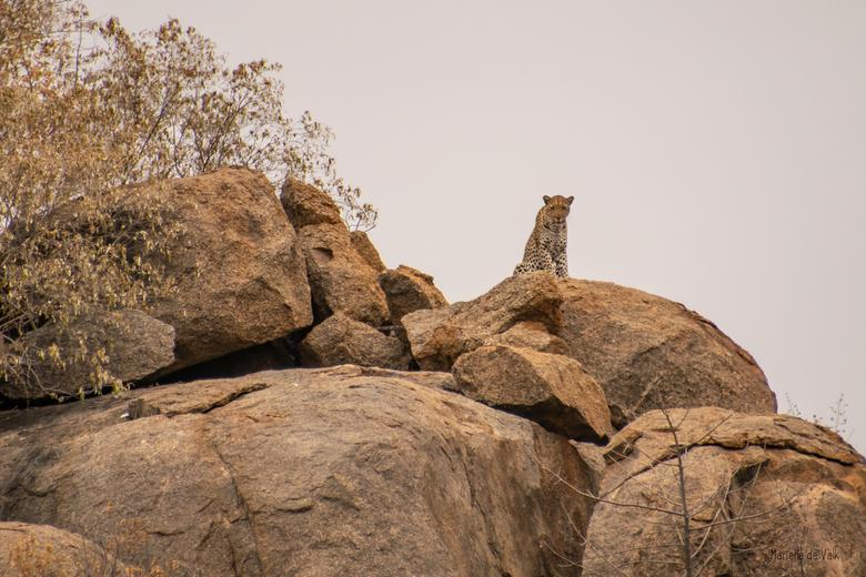 Daar is die II - En daar zat die.... Hoog boven op de rotsen uitkijkend over het inmense landschap en ons, mensen, goed in de gaten houdend. <br /> H