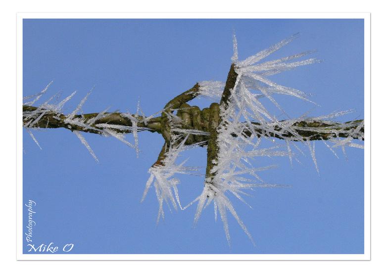 Winter 2009 - Prikkeldraad met ijskristallen