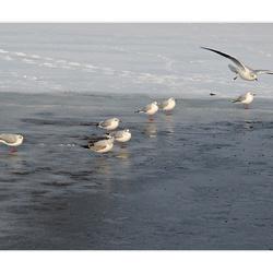 op het ijs....