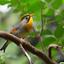kleurrijk vogeltje