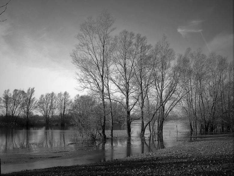 hoogwater - De Rijn bij Spijk heeft weer veel water te verwerken....hoogwater op dit moment.