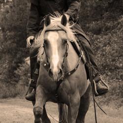 men & quarterhorse
