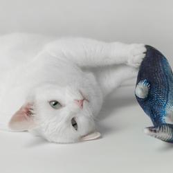 Lief met een nieuwe vis !