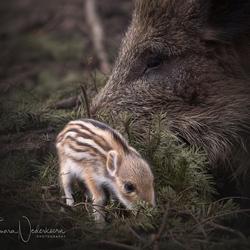 ©Tamara Nederkoorn Photography