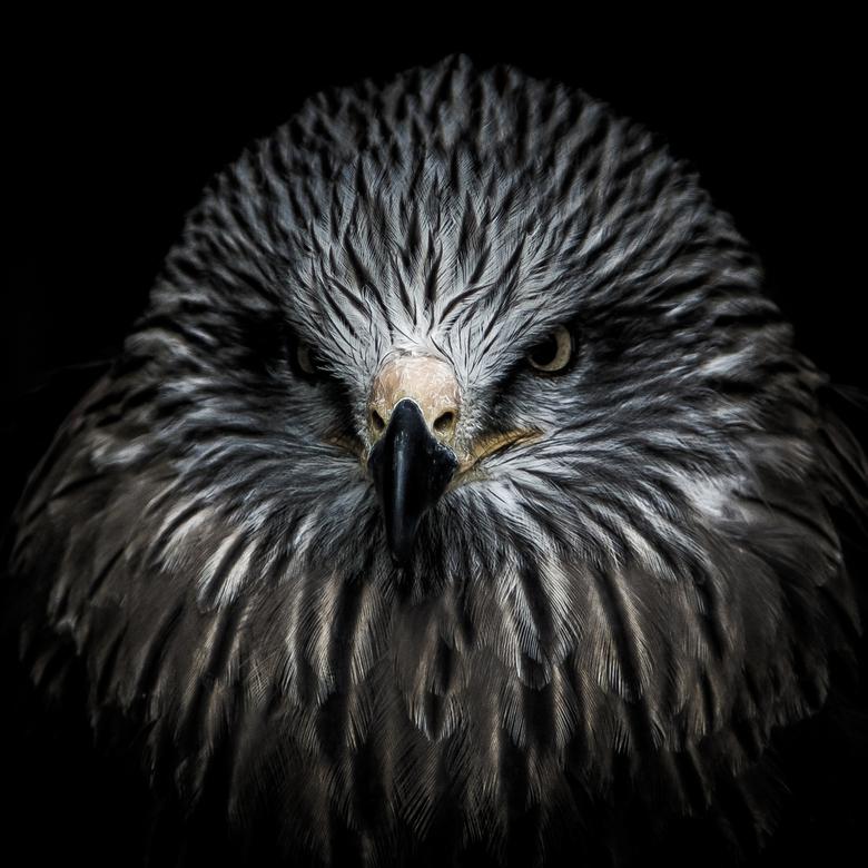 Roofvogel portret