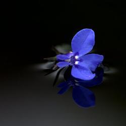 Blue IV