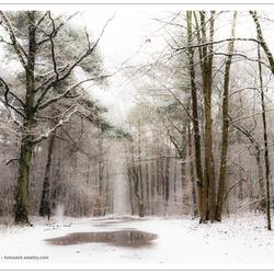 Winters bos (3)