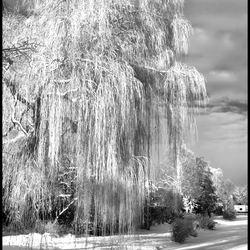 winterdrama II