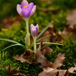 Voorjaar en najaar samen