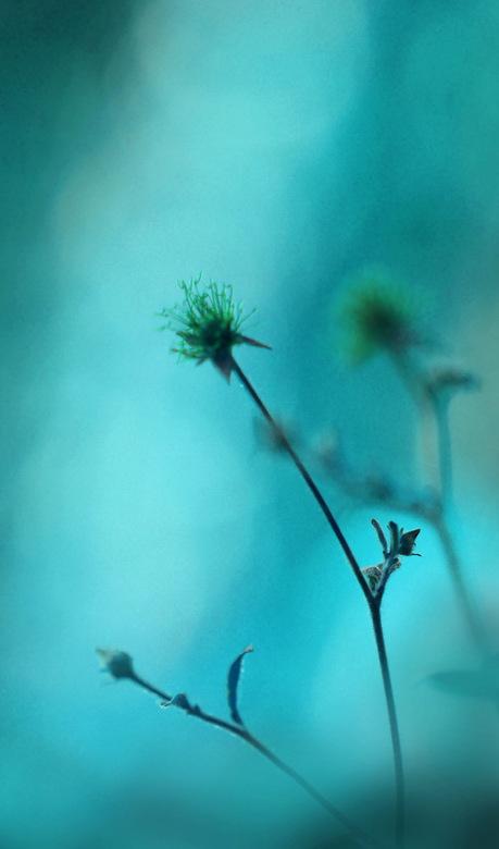 Aqua delight - Foto gemaakt op de workshop Macrofotografie bij Andrea Gulickx, bekend op Zoom als http://andrea66.zoom.nl/<br />