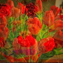 Tulpen meervoudige belichting