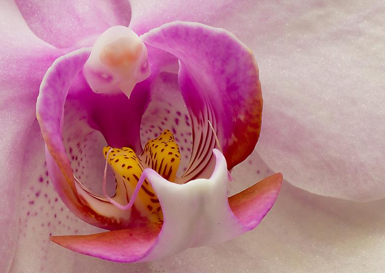 Bloem-4 - Orchidee