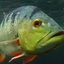 Something fishy...