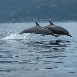 2 Dolfijnen