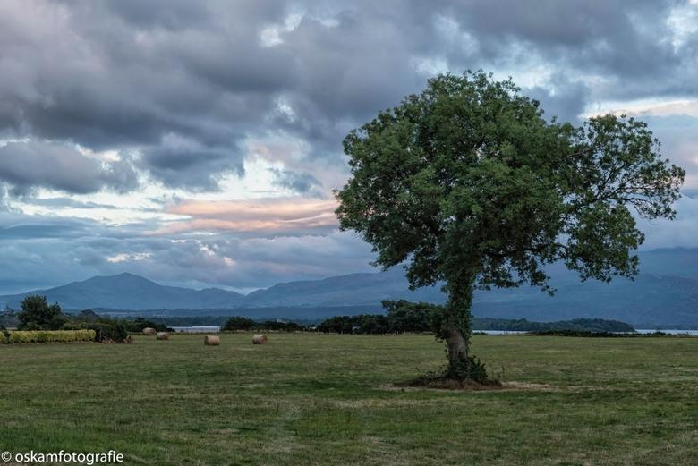 lonely tree - Tegen zonsondergang in Killarney, Ierland.
