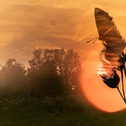Appelzak sunset