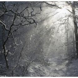 zon in de sneeuw