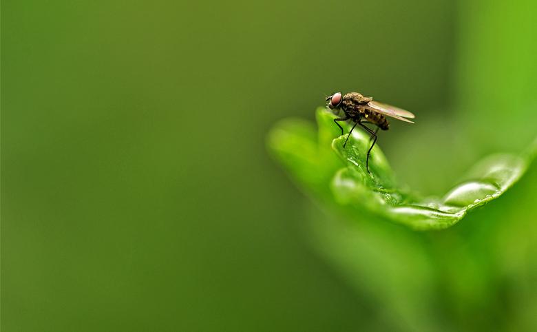 Fly - Even rust om daarna weer door te vliegen.