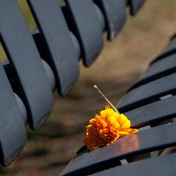 Verlaten bloem
