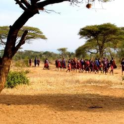 Color of Masai in African Wilderness