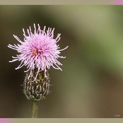 zomaar een bloemtje