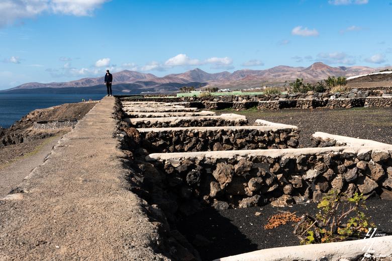 Druiven - In Lanzarote omweg naar het plaatsje Puerto Calero langs de kust een druiven perceeltje. Waar je druiven planten zie , zie ook een muurtje e