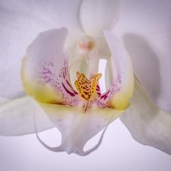 Orchidee van dichtbij