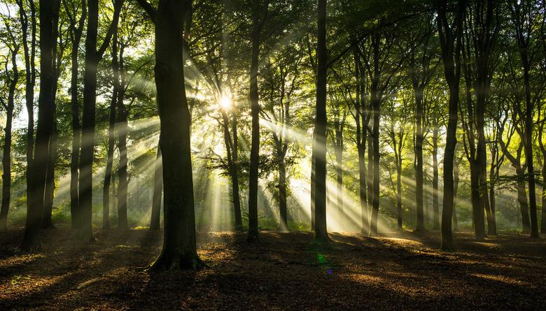Morning light - Prachtig licht vanmorgen nabij Ede. Een mooie gelegenheid om er op uit te gaan! Voor deze foto heb ik de Nikkor 35mm f/2.8 ai uit 1978