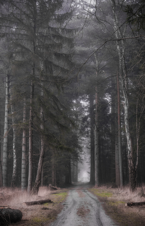 big forest -
