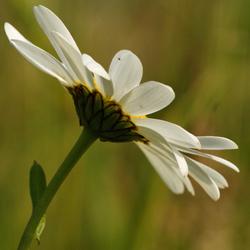 bloem in de zon