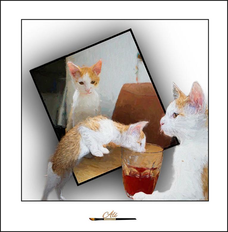 katjes................. - ze hebben alledrie dorst...........<br /> heb ze maar in een outofbound gezet...<br /> en de oorspronkelijke drie foto&#03