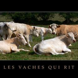 les vaches qui rit