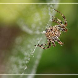 nog een spin !