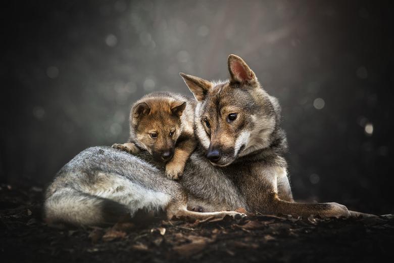 Motherly love - Niks is mooier dan de connectie tussen moeder en haar pup te fotograferen.