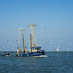 Birds & Boats
