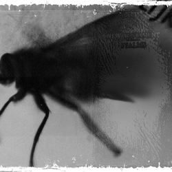 The fly who did not fly anymore