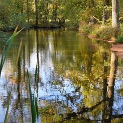 DSC_5477   Bornsebeek.