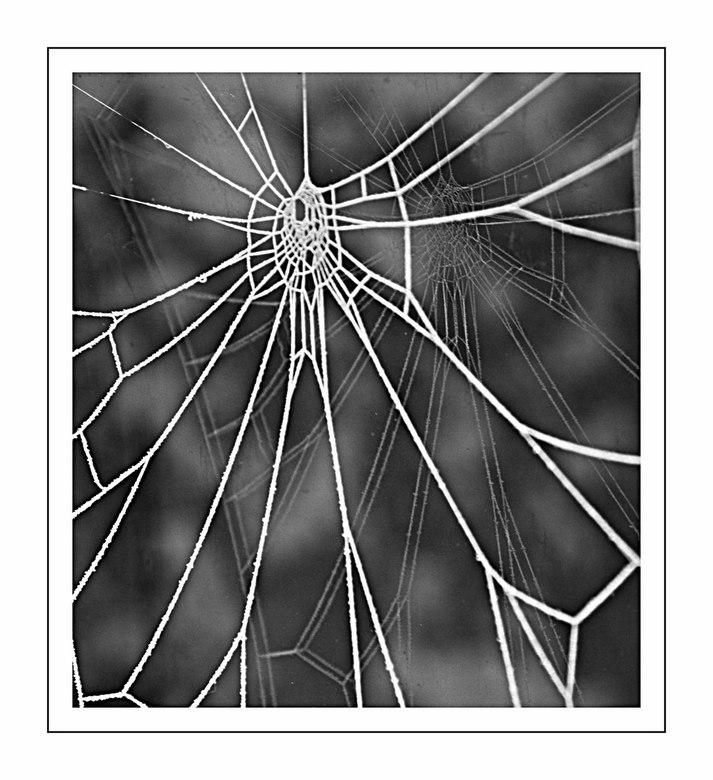 WinterWeb - Deze spinneweb hangt voor het raam van een schuur. Er zit een ijslaag overheen en ook is de weerspiegeling van de draden goed te zien in h