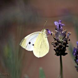 White & Purple...