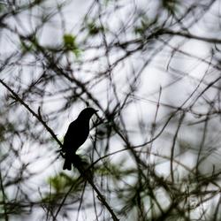 het vogeltje