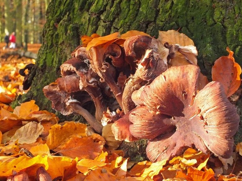 Mooie herfst toegewenst!! - Allemaal een mooie herfst toegewenst, met vele prachtige fotomomenten!!