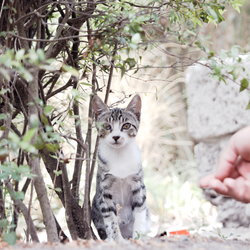 Pompeii - Kitten