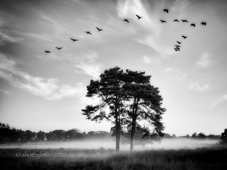 Birds flying high - Op de heide voor de zonsopkomst en net klaar met mijn foto. Komt er inees een groep ganzen aangevlogen, snel de camera van statief