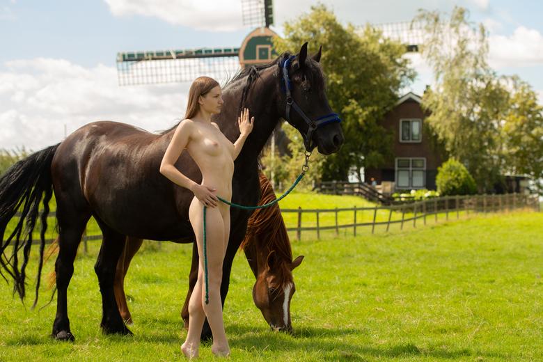 Dutch countrylife -