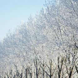 Rossum in de winter