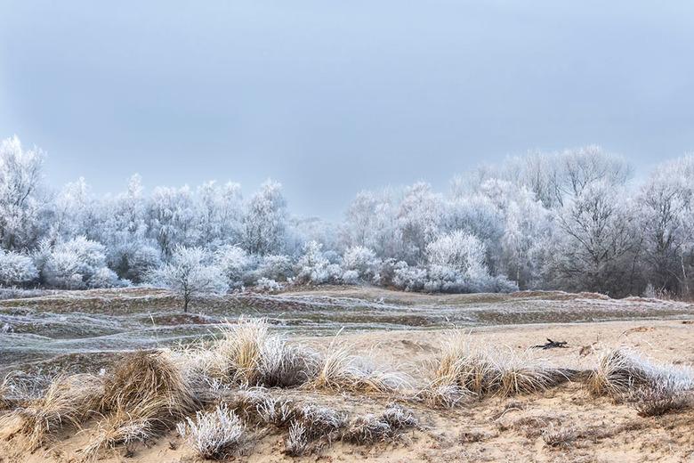 Hartje winter - Vannacht blijkbaar gesneeuwd in Den Haag, er ligt een mooi wit kleedje op straat maar helaas nog geen rijp want het is kurkdroog dus d