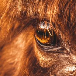 Het zal je maar overkomen, geboren worden als ezel...
